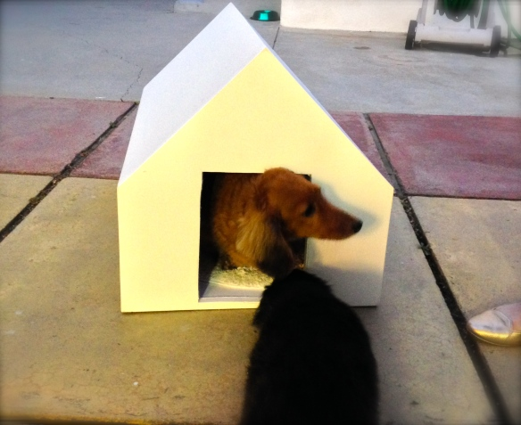 We built  a fomecore dog house. Joe likes it. Tim's not so sure.