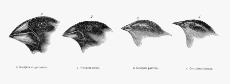Different beaks for different birds.